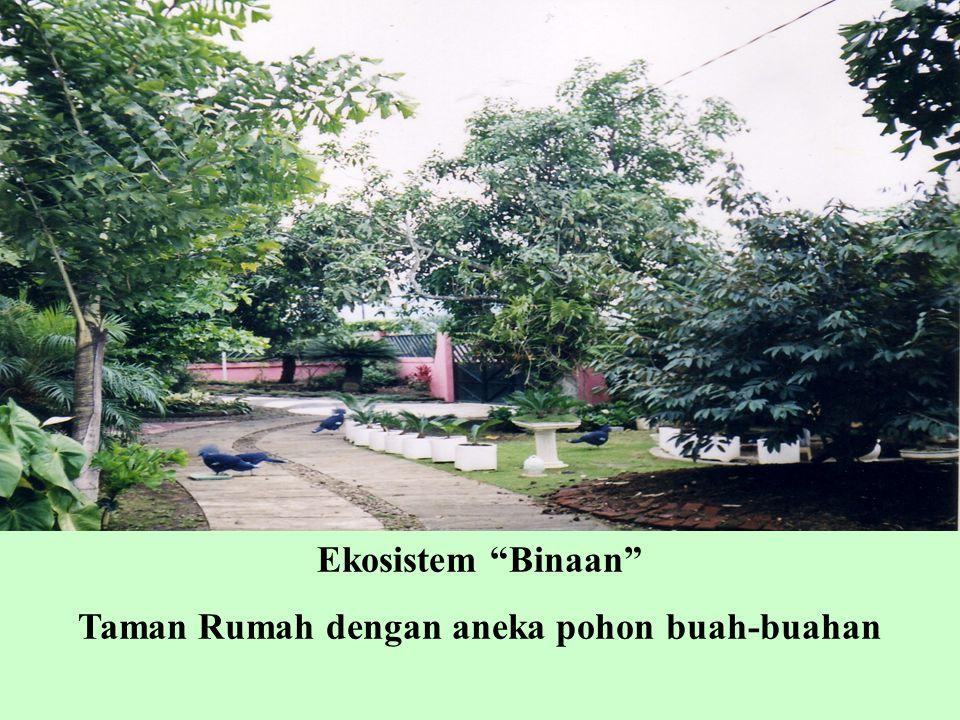 """Ekosistem """"Binaan"""" Taman Rumah dengan aneka pohon buah-buahan"""