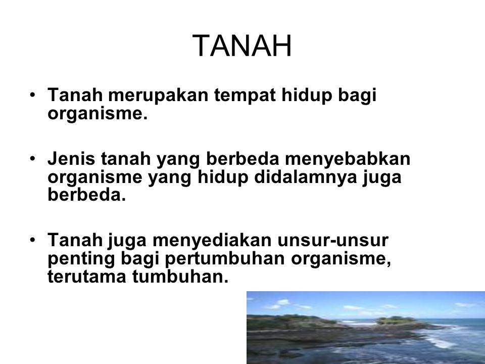 TANAH Tanah merupakan tempat hidup bagi organisme. Jenis tanah yang berbeda menyebabkan organisme yang hidup didalamnya juga berbeda. Tanah juga menye