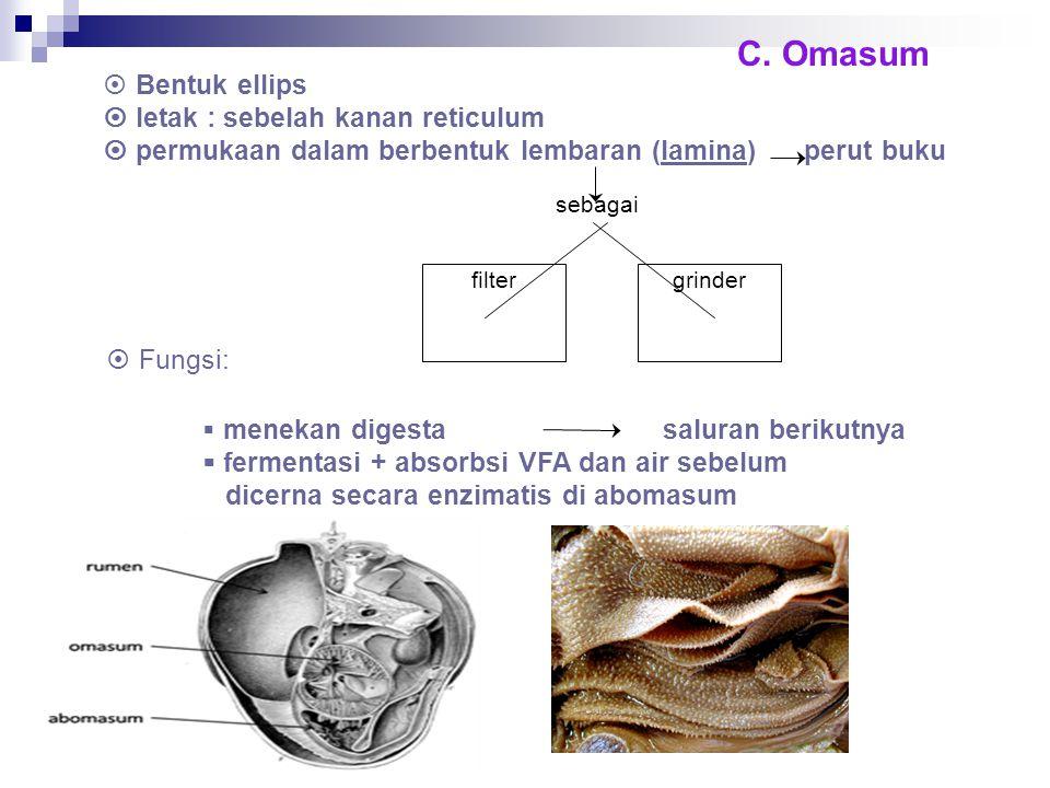 sebagai C. Omasum  Bentuk ellips  letak : sebelah kanan reticulum  permukaan dalam berbentuk lembaran (lamina) perut buku filtergrinder  Fungsi: 