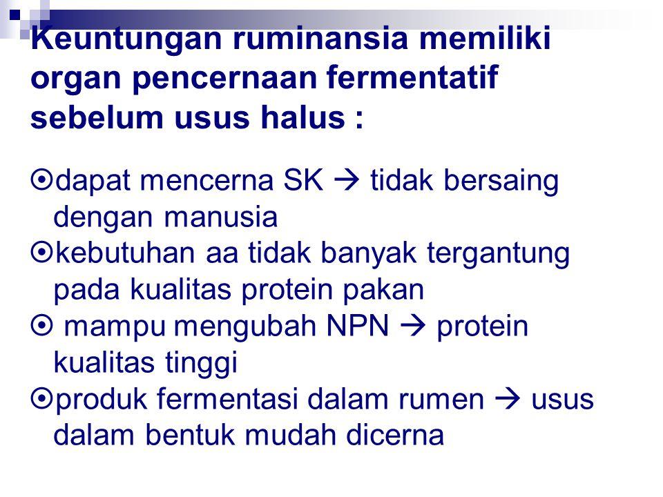 Keuntungan ruminansia memiliki organ pencernaan fermentatif sebelum usus halus :  dapat mencerna SK  tidak bersaing dengan manusia  kebutuhan aa ti