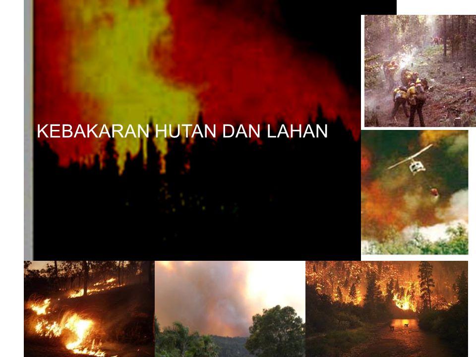 Surface Fire Api berasal dari permukaan (surface) Api menjalar lebih cepat karena bahan bakar terekspose langsung dengan angin dan suplai oksigen lebih besar.