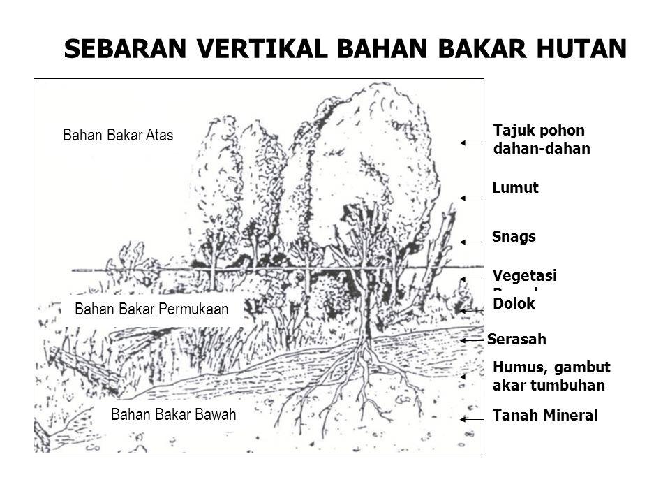 SEBARAN VERTIKAL BAHAN BAKAR HUTAN Bahan Bakar Atas Bahan Bakar Permukaan Bahan Bakar Bawah Tajuk pohon dahan-dahan Lumut Snags Vegetasi Bawah Dolok Serasah Humus, gambut akar tumbuhan Tanah Mineral