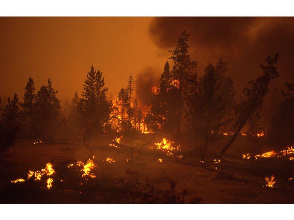 Cuaca dan Iklim Menurut Fuller (1991), karena cuaca sangat mempengaruhi bagaimana, dimana dan kapan kebakaran hutan dapat terjadi, pengendali kebakaran menyebutnya sebagai cuaca kebakaran (fire weather) yaitu sifat-sifat cuaca yang mempengaruhi terjadinya kebakaran.