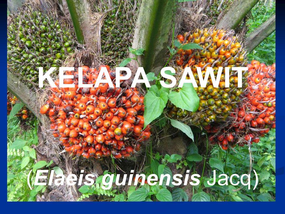 KELAPA SAWIT (Elaeis guinensis Jacq)