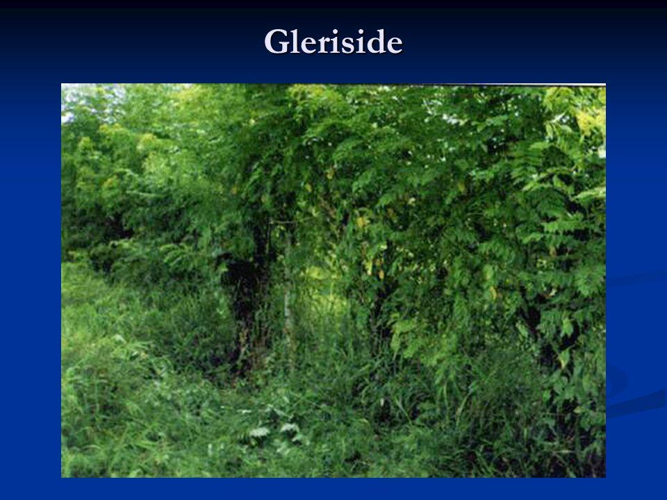 Gleriside