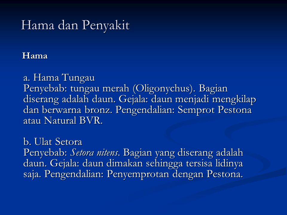 Hama dan Penyakit Hama dan Penyakit Hama Hama a.Hama Tungau Penyebab: tungau merah (Oligonychus).