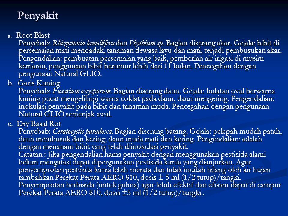 Penyakit a.Root Blast Penyebab: Rhizoctonia lamellifera dan Phythium sp.