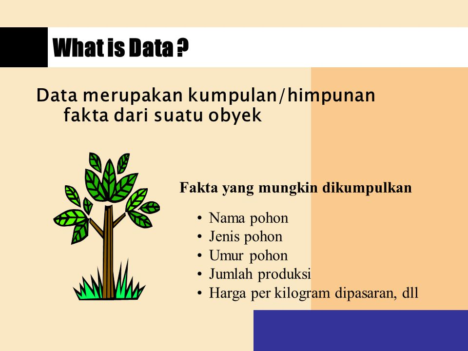 What is Data ? Data merupakan kumpulan/himpunan fakta dari suatu obyek Fakta yang mungkin dikumpulkan Nama pohon Jenis pohon Umur pohon Jumlah produks