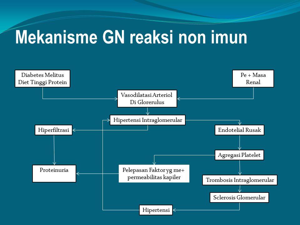 Mekanisme GN reaksi non imun Diabetes Melitus Diet Tinggi Protein Pe + Masa Renal Vasodilatasi Arteriol Di Glorerulus Hipertensi Intraglomerular Hiper