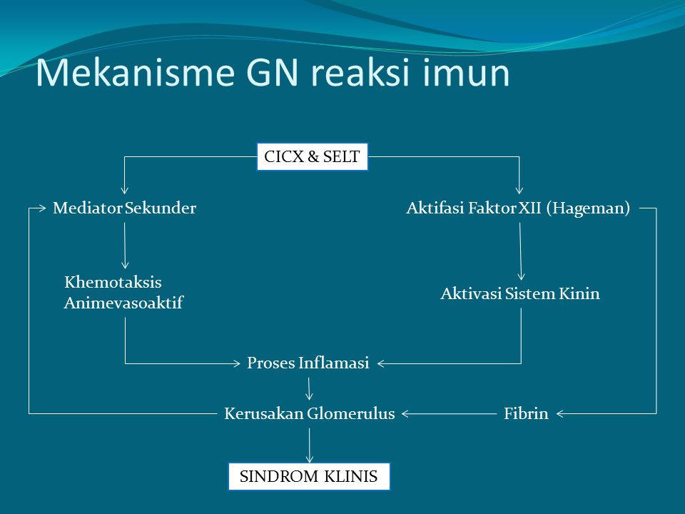 Mekanisme GN reaksi imun CICX & SELT Mediator SekunderAktifasi Faktor XII (Hageman) Khemotaksis Animevasoaktif Aktivasi Sistem Kinin Proses Inflamasi