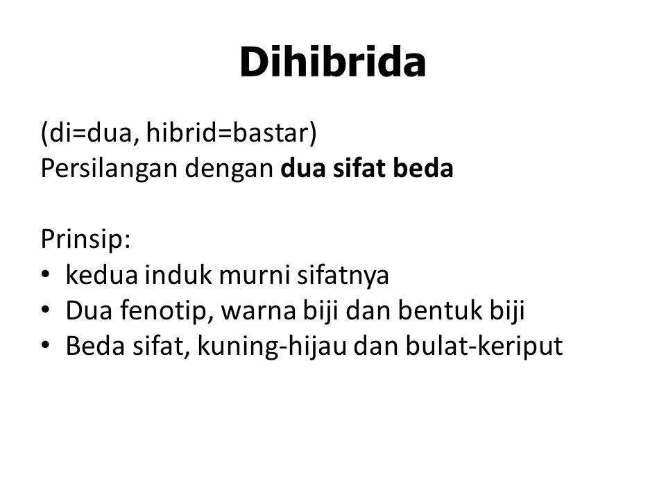 Dihibrida (di=dua, hibrid=bastar) Persilangan dengan dua sifat beda Prinsip: kedua induk murni sifatnya Dua fenotip, warna biji dan bentuk biji Beda sifat, kuning-hijau dan bulat-keriput