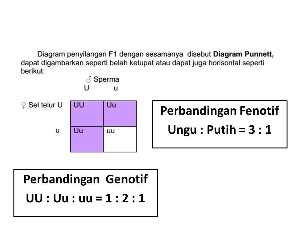 Perbandingan Fenotif Ungu : Putih = 3 : 1 Perbandingan Genotif UU : Uu : uu = 1 : 2 : 1