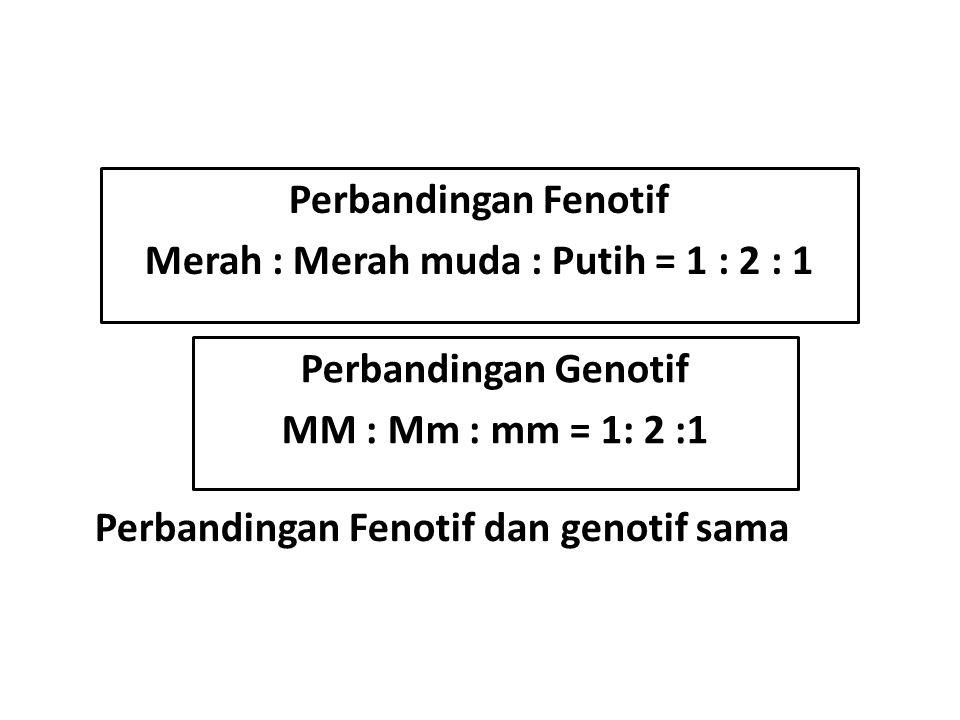 Perbandingan Fenotif Merah : Merah muda : Putih = 1 : 2 : 1 Perbandingan Genotif MM : Mm : mm = 1: 2 :1 Perbandingan Fenotif dan genotif sama