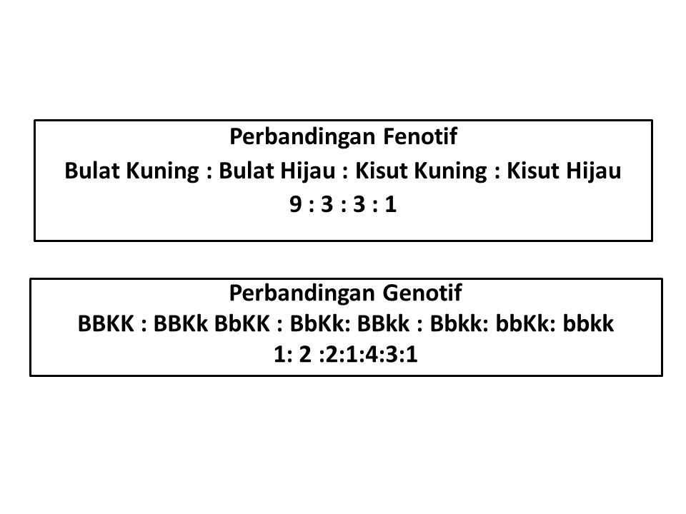 Perbandingan Fenotif Bulat Kuning : Bulat Hijau : Kisut Kuning : Kisut Hijau 9 : 3 : 3 : 1 Perbandingan Genotif BBKK : BBKk BbKK : BbKk: BBkk : Bbkk: bbKk: bbkk 1: 2 :2:1:4:3:1