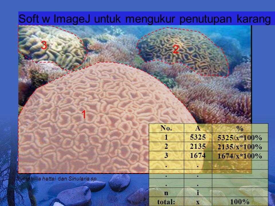 1 2 3 Soft w ImageJ untuk mengukur penutupan karang Symphillia hattai dan Sinularia sp No.A% 153255325/x*100% 221352135/x*100% 316741674/x*100%......