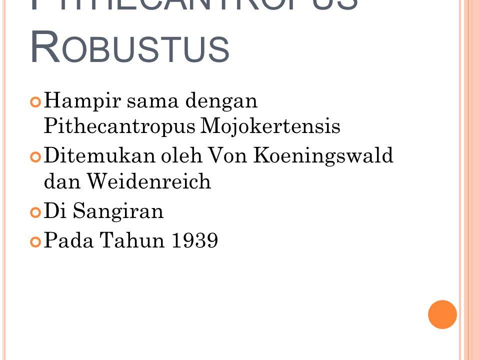 P ITHECANTROPUS R OBUSTUS Hampir sama dengan Pithecantropus Mojokertensis Ditemukan oleh Von Koeningswald dan Weidenreich Di Sangiran Pada Tahun 1939