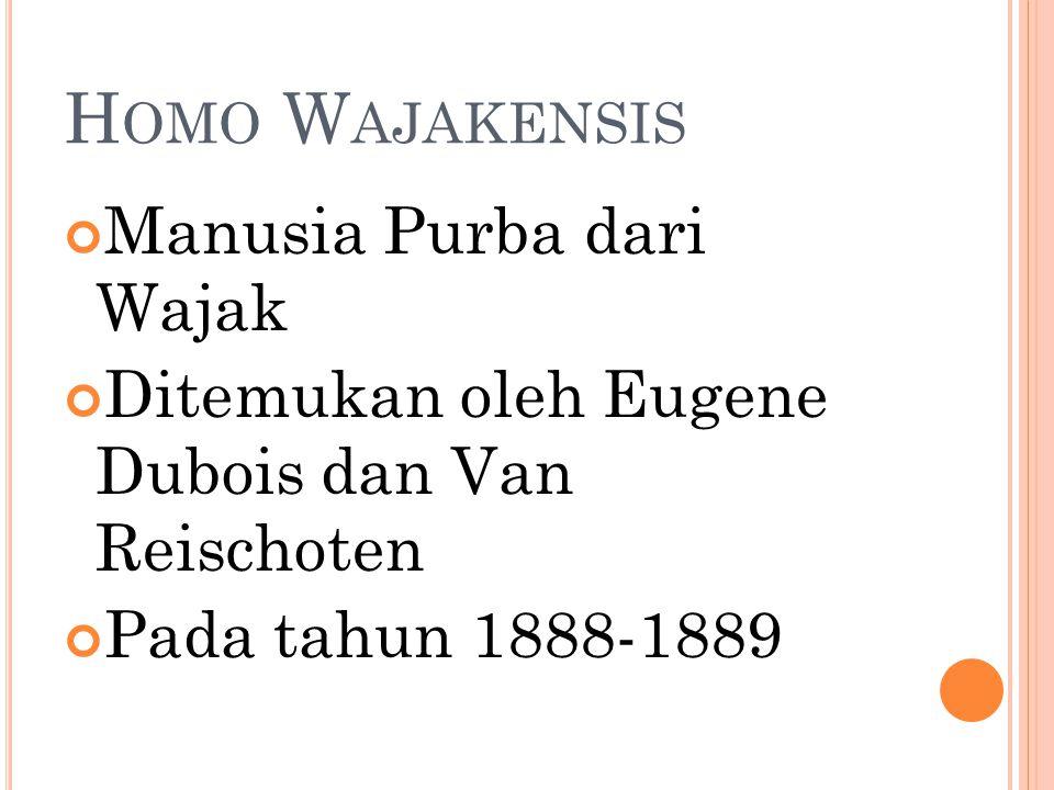 H OMO W AJAKENSIS Manusia Purba dari Wajak Ditemukan oleh Eugene Dubois dan Van Reischoten Pada tahun 1888-1889