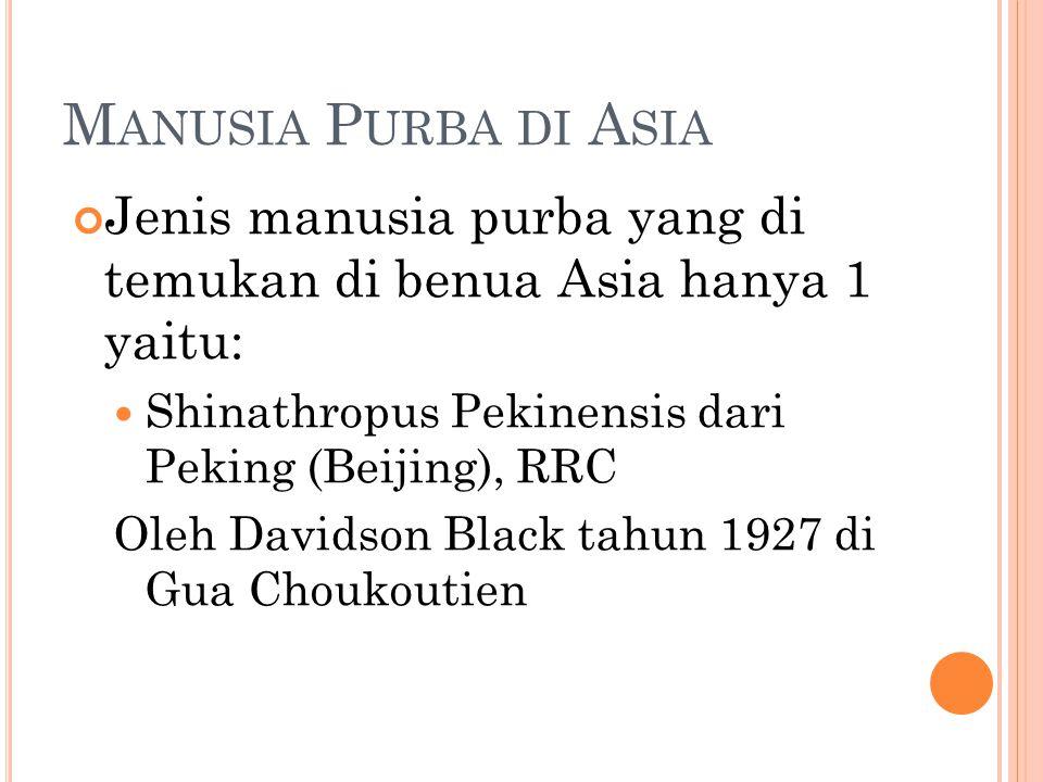 M ANUSIA P URBA DI A SIA Jenis manusia purba yang di temukan di benua Asia hanya 1 yaitu: Shinathropus Pekinensis dari Peking (Beijing), RRC Oleh Davidson Black tahun 1927 di Gua Choukoutien