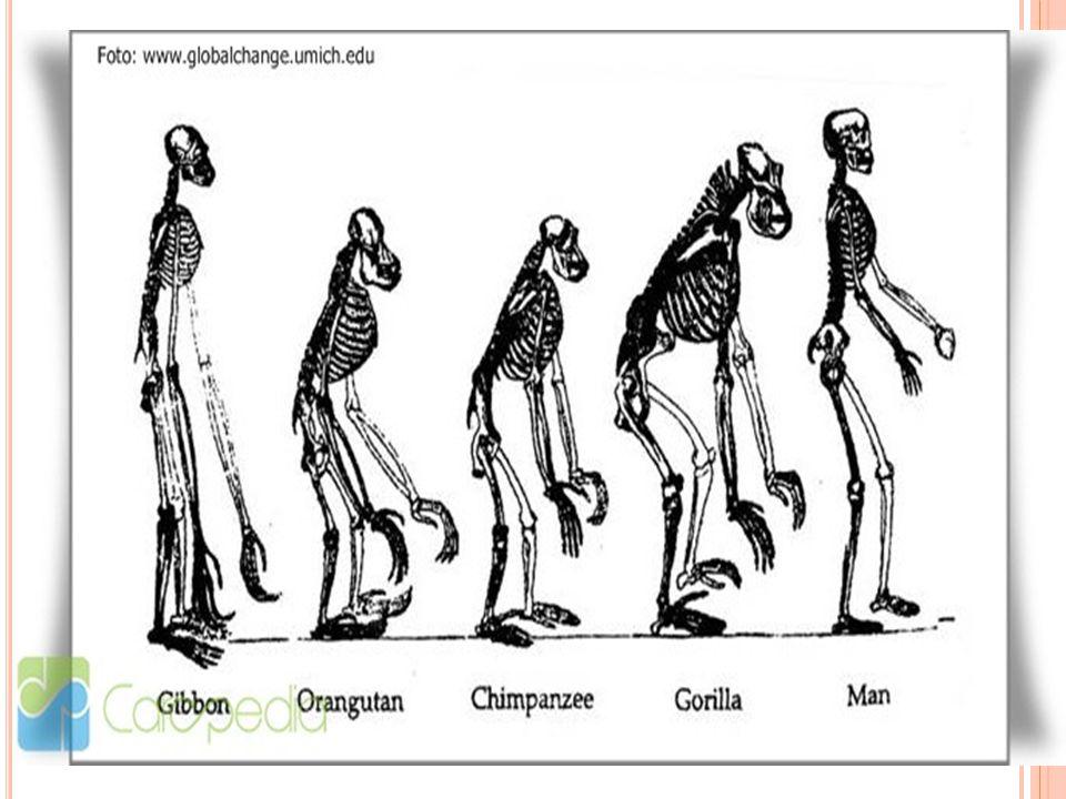 J ENIS M ANUSIA P URBA Manusia purba memiliki beberapa jenis yaitu: Megantropus Palaeojavanicus Pithecantropus Homo Sapien