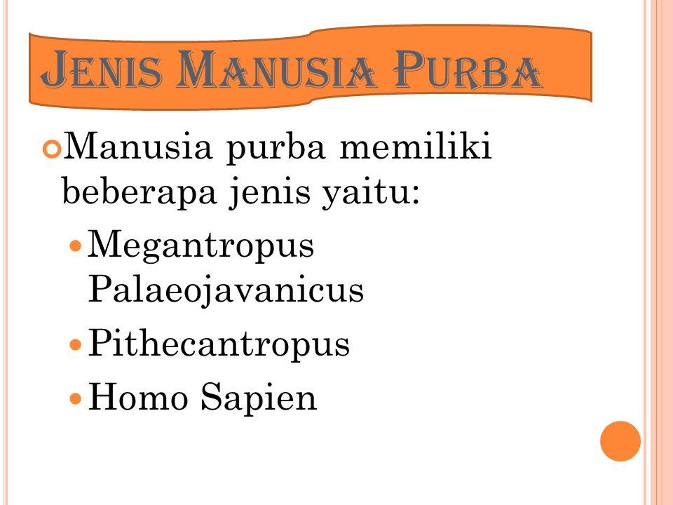H OMO S APIENS Manusia purba yang memiliki sifat seperti manusia sekarang Diperkirakan hidup 25ribu- 40ribu tahun yang lalu Homo Sapiens memiliki 2 jenis yaitu Homo Soloensis Homo Wajakensis