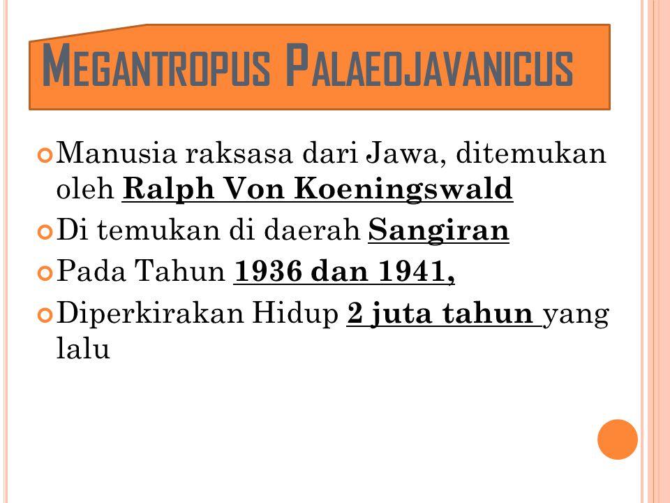 M EGANTROPUS P ALAEOJAVANICUS Manusia raksasa dari Jawa, ditemukan oleh Ralph Von Koeningswald Di temukan di daerah Sangiran Pada Tahun 1936 dan 1941, Diperkirakan Hidup 2 juta tahun yang lalu