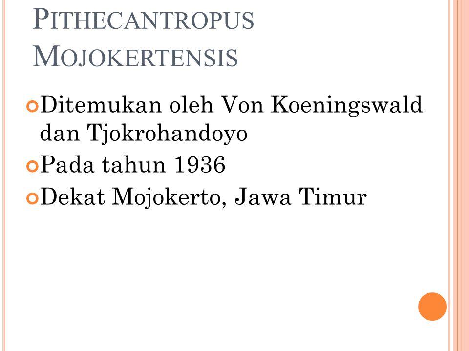 P ITHECANTROPUS M OJOKERTENSIS Ditemukan oleh Von Koeningswald dan Tjokrohandoyo Pada tahun 1936 Dekat Mojokerto, Jawa Timur