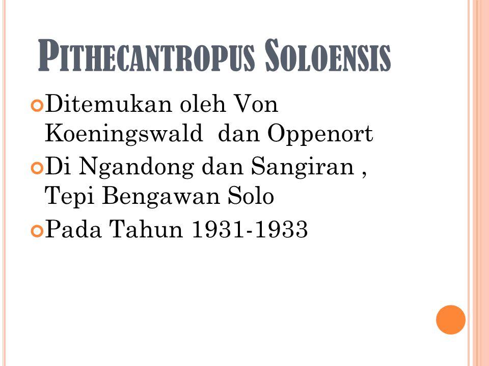 P ITHECANTROPUS S OLOENSIS Ditemukan oleh Von Koeningswald dan Oppenort Di Ngandong dan Sangiran, Tepi Bengawan Solo Pada Tahun 1931-1933