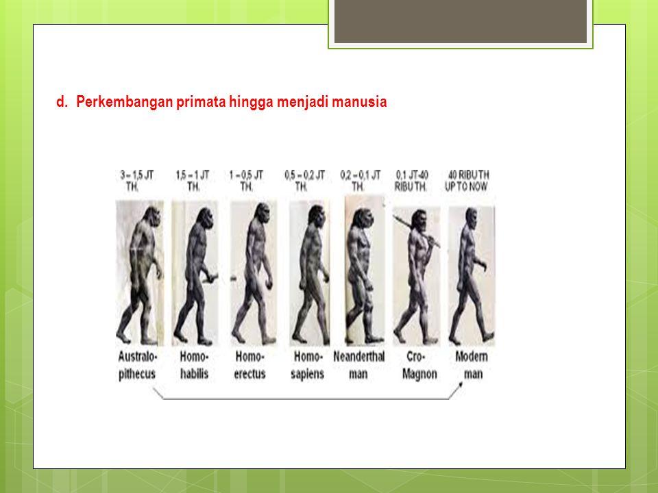 d. Perkembangan primata hingga menjadi manusia