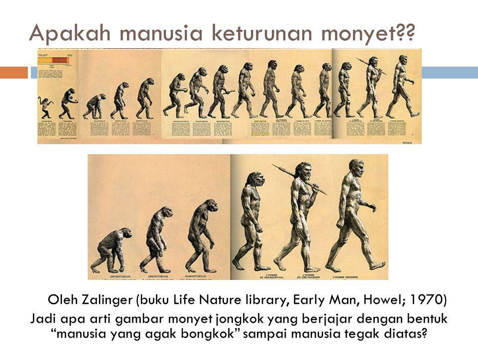 Apakah manusia keturunan monyet?? Oleh Zalinger (buku Life Nature library, Early Man, Howel; 1970) Jadi apa arti gambar monyet jongkok yang berjajar d