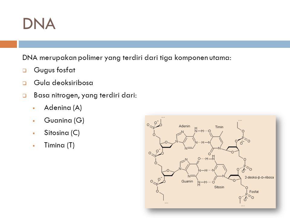 DNA DNA merupakan polimer yang terdiri dari tiga komponen utama:  Gugus fosfat  Gula deoksiribosa  Basa nitrogen, yang terdiri dari:  Adenina (A)