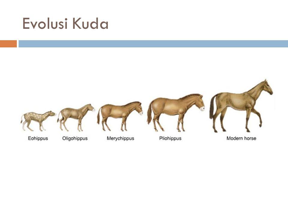 Evolusi Kuda