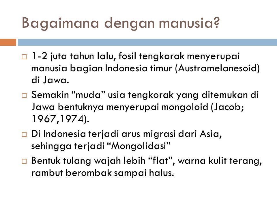 """Bagaimana dengan manusia?  1-2 juta tahun lalu, fosil tengkorak menyerupai manusia bagian Indonesia timur (Austramelanesoid) di Jawa.  Semakin """"muda"""