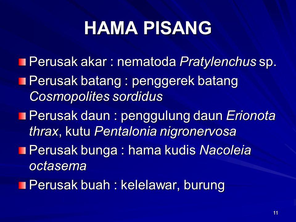 11 HAMA PISANG Perusak akar : nematoda Pratylenchus sp.