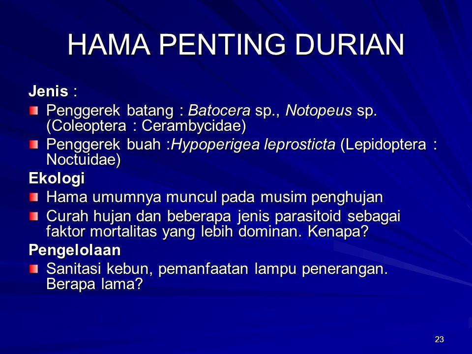 23 HAMA PENTING DURIAN Jenis : Penggerek batang : Batocera sp., Notopeus sp.