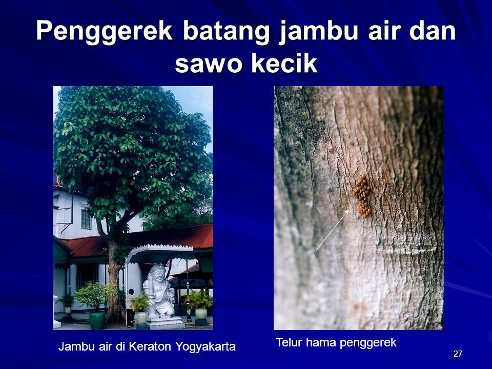 27 Penggerek batang jambu air dan sawo kecik Jambu air di Keraton Yogyakarta Telur hama penggerek