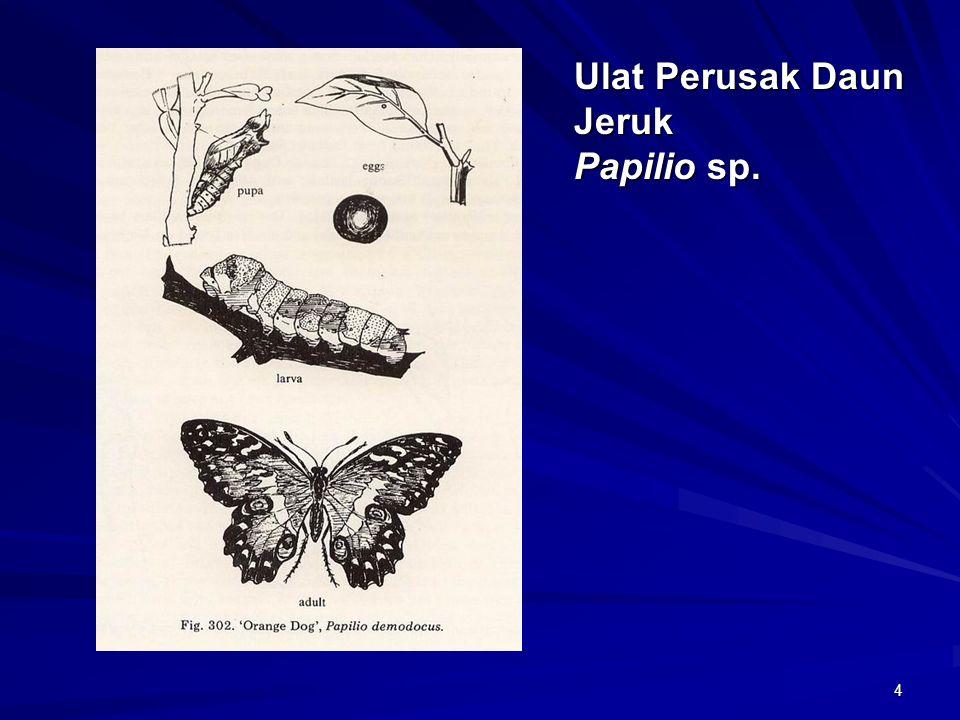 4 Ulat Perusak Daun Jeruk Papilio sp.