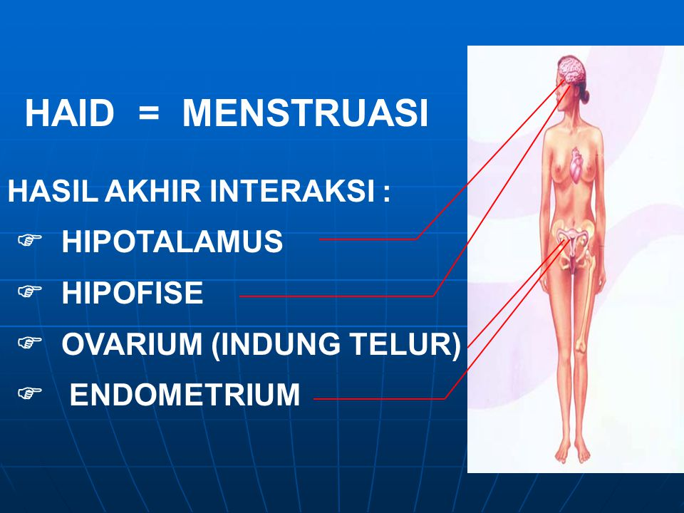 HAID = MENSTRUASI HASIL AKHIR INTERAKSI :  HIPOTALAMUS  HIPOFISE  OVARIUM (INDUNG TELUR)  ENDOMETRIUM