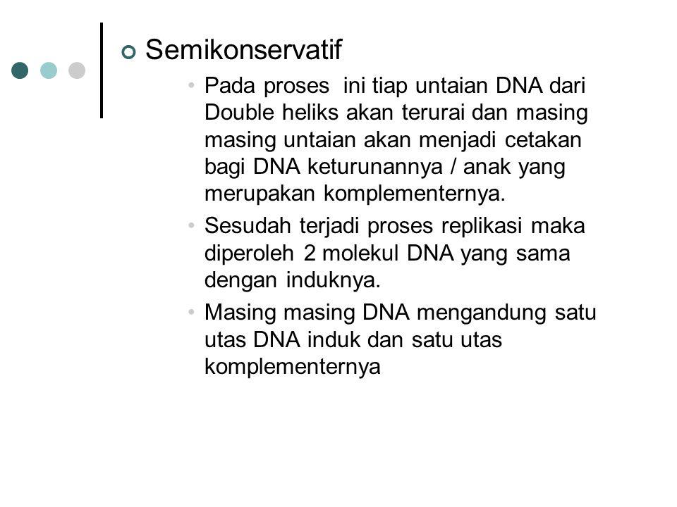 Semikonservatif Pada proses ini tiap untaian DNA dari Double heliks akan terurai dan masing masing untaian akan menjadi cetakan bagi DNA keturunannya