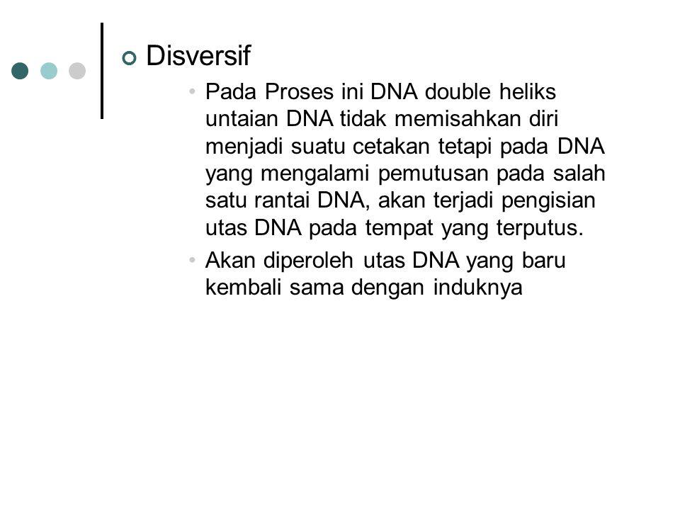 Enzim yang terlibat dalam proses Replikasi NoJenis enzim/protein Fungsi 1DNA GiraseMengendurkan tegangan pada waktu penguraian heliks kembar 2HelikaseMembuka heliks kembar DNA dengan memutuskan ikatan hidrogen 3HDP ( Helik Destabilizizing Protein ) Mencegah utasan yang sudah terpisah bergabung lagi 4DNA PolimeraseKatalisis sintesis rantai DNA 5RNA PolimeraseMeletakkan molekul RNA primer, sebagai pemula sintesis DNA 6Eksonuklease 5' - - 3'Memotong nukleotide dari arah ujung 5' 7Eksonuklease 3' - - 5'Memotong nukleotide dari araj ujung 3' 8DNA ligaseMenyambung dua rantai DNA