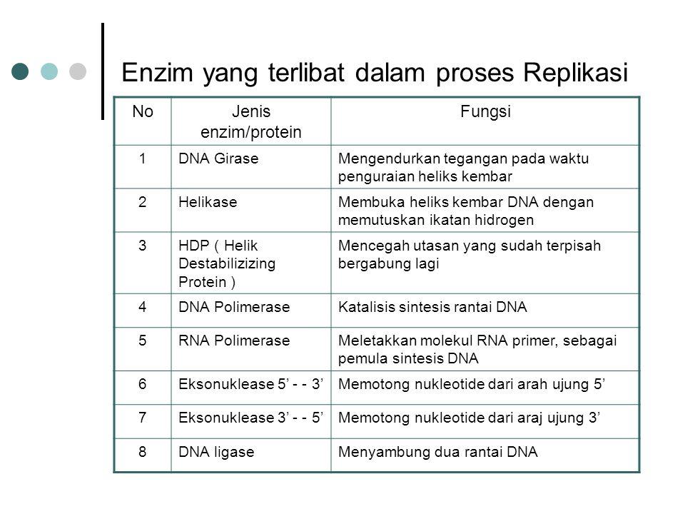 Enzim yang terlibat dalam proses Replikasi NoJenis enzim/protein Fungsi 1DNA GiraseMengendurkan tegangan pada waktu penguraian heliks kembar 2Helikase