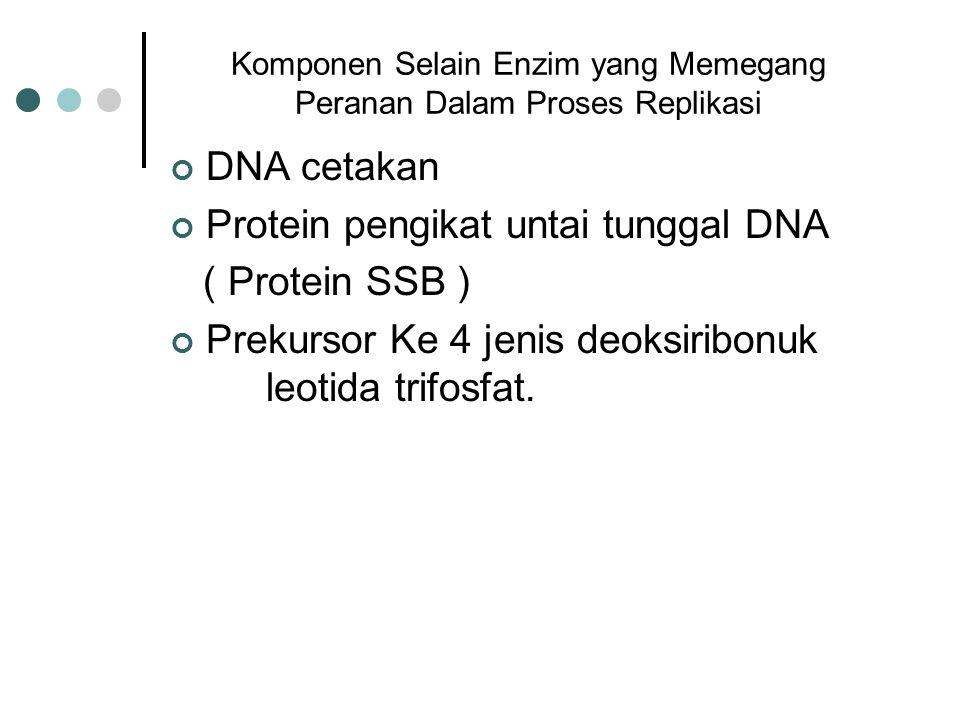 Komponen Selain Enzim yang Memegang Peranan Dalam Proses Replikasi DNA cetakan Protein pengikat untai tunggal DNA ( Protein SSB ) Prekursor Ke 4 jenis