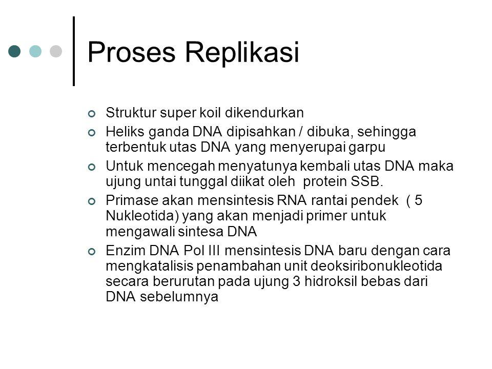 Proses Replikasi Struktur super koil dikendurkan Heliks ganda DNA dipisahkan / dibuka, sehingga terbentuk utas DNA yang menyerupai garpu Untuk mencega