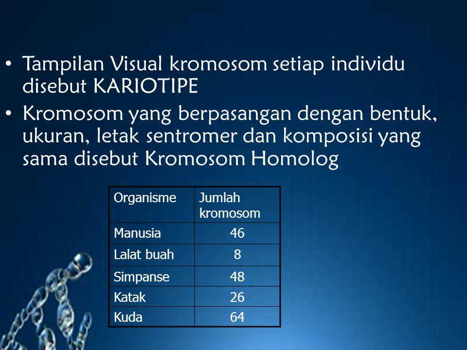 Tampilan Visual kromosom setiap individu disebut KARIOTIPE Kromosom yang berpasangan dengan bentuk, ukuran, letak sentromer dan komposisi yang sama di