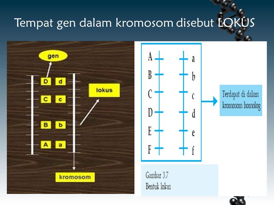 Tempat gen dalam kromosom disebut LOKUS