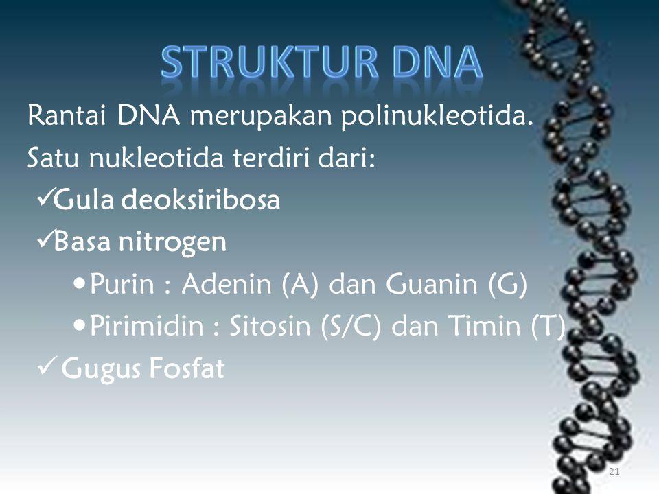 Rantai DNA merupakan polinukleotida. Satu nukleotida terdiri dari: Gula deoksiribosa Basa nitrogen Purin : Adenin (A) dan Guanin (G) Pirimidin : Sitos