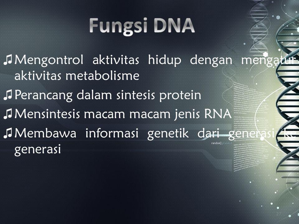 ♫ Mengontrol aktivitas hidup dengan mengatur aktivitas metabolisme ♫ Perancang dalam sintesis protein ♫ Mensintesis macam macam jenis RNA ♫ Membawa in