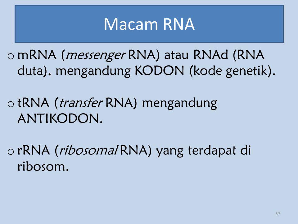 Macam RNA 37 o mRNA (messenger RNA) atau RNAd (RNA duta), mengandung KODON (kode genetik). o tRNA (transfer RNA) mengandung ANTIKODON. o rRNA (ribosom