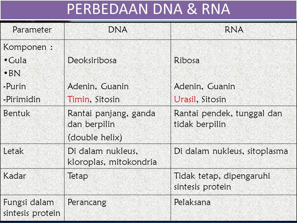 ParameterDNARNA Komponen : Gula BN -Purin -Pirimidin Deoksiribosa Adenin, Guanin Timin, Sitosin Ribosa Adenin, Guanin Urasil, Sitosin BentukRantai pan