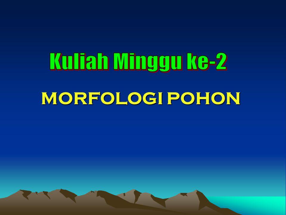 MORFOLOGI POHON