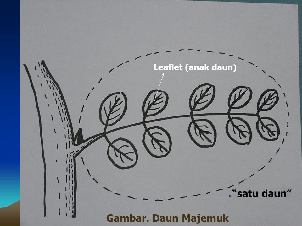 Gambar. Daun Majemuk satu daun Leaflet (anak daun)